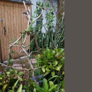 bradluthin-garden-trellis-rustic-tree-branch-01-1